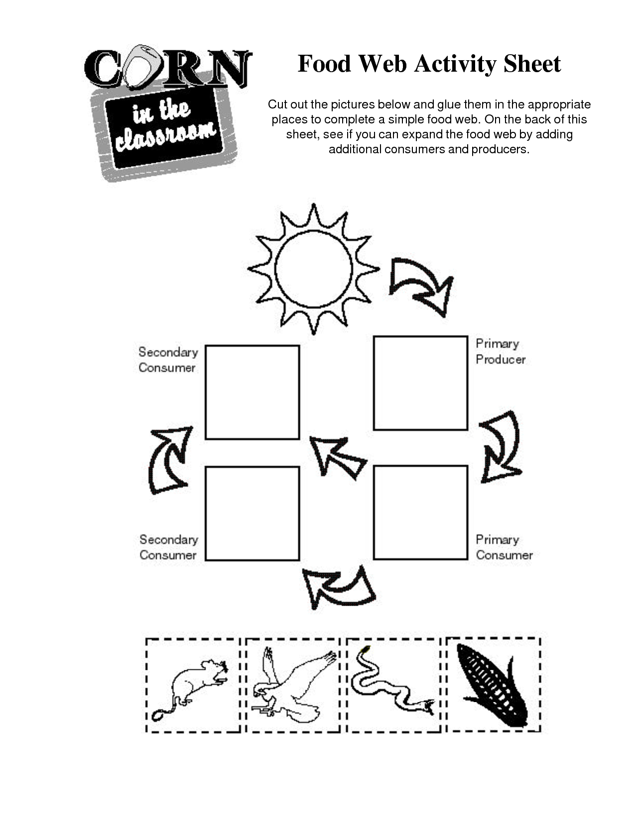 14 Best Images Of Simple Food Chain Worksheets - Food | Food Chain Printable Worksheets