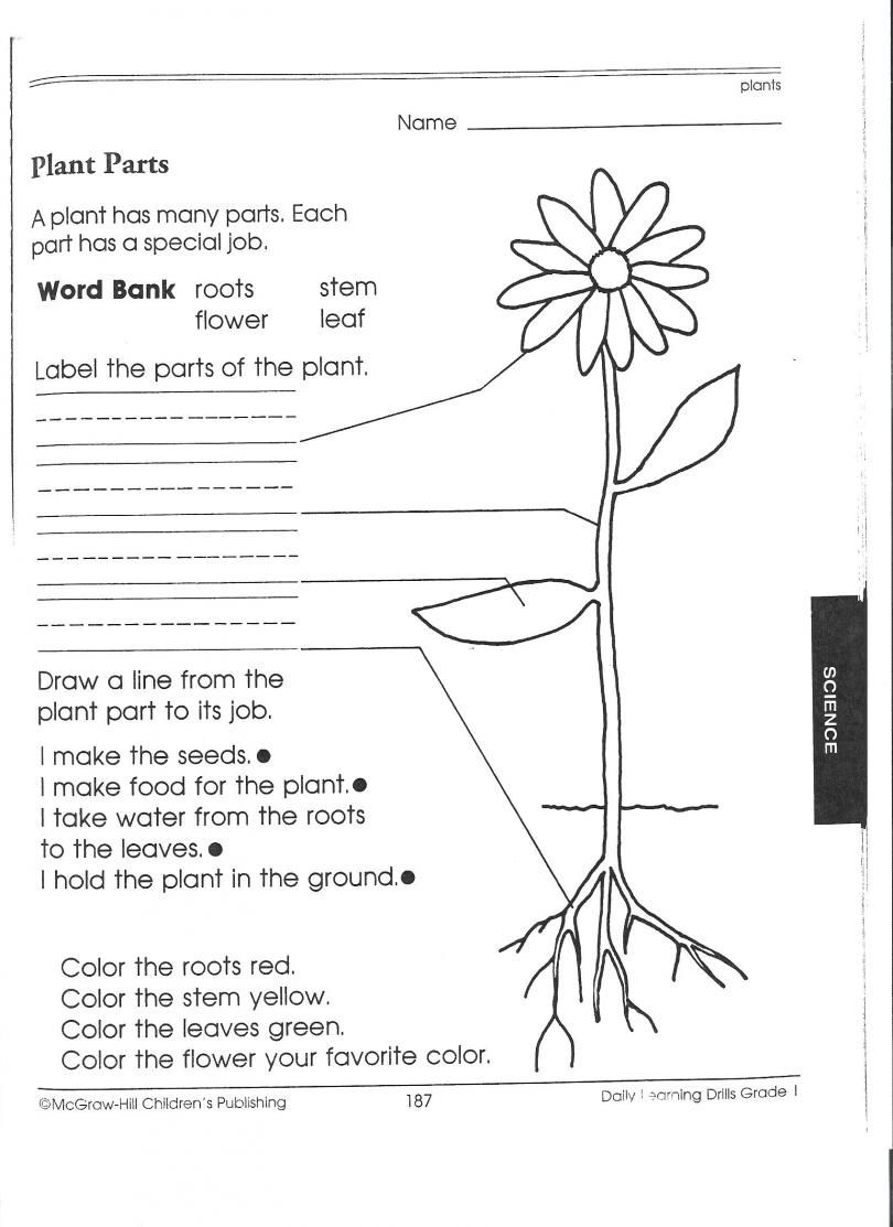 1St Grade Science Worksheets   Picking Apart Plants - People   Growing And Changing Printable Worksheets