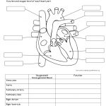 Anatomy Labeling Worksheets   Bing Images | Esthetics | Human Body | Anatomy And Physiology Printable Worksheets