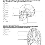 Anatomy Labeling Worksheets   Google Search | I Heart Anatomy | Anatomy And Physiology Printable Worksheets