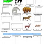 Animals   Food Chain Worksheet   Free Esl Printable Worksheets Made | Food Chain Printable Worksheets