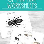 Ant Life Cycle Worksheets | Ant Worksheets Printables