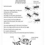 Ants Worksheet   Free Esl Printable Worksheets Madeteachers | Ant Worksheets Printables