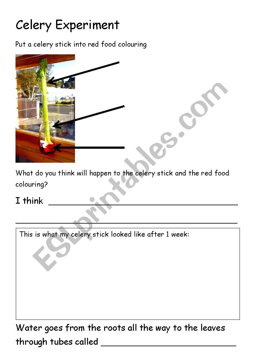 Celery Experiment Worksheet - Esl Worksheetkelleych | Celery Experiment Printable Worksheet