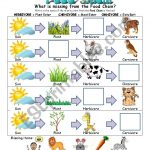 Food Chain Worksheet   Esl Worksheetslvrwolf | Food Chain Printable Worksheets