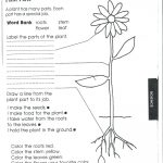 Food Coloring Flower Experiment Worksheet | Bahangit.co | Celery Experiment Printable Worksheet