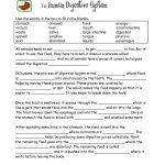 Food Digestion Worksheets | Digestive System Worksheets   Free | Free Printable Biology Worksheets For High School