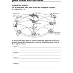 Food Webs And Food Chains Worksheet | Food Chain Printable Worksheets
