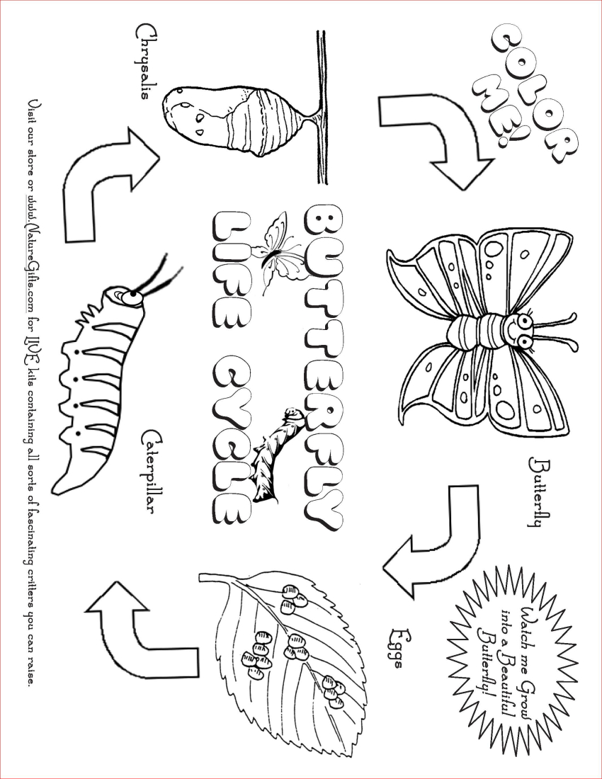 Free Butterfly Coloring Pages: Butterfly Life Cycle | Free Plant Life Cycle Worksheet Printables