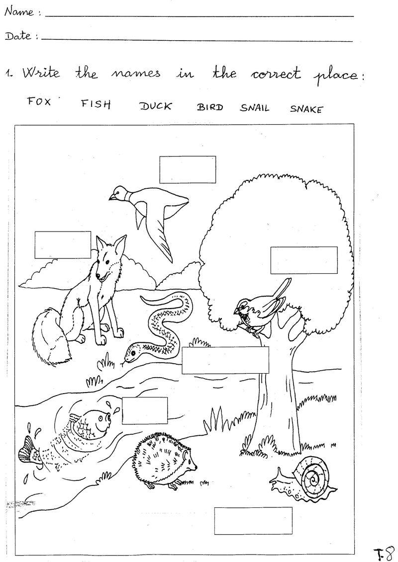 Free Science Worksheets Animal - Printable Worksheet   Printable Science Worksheets