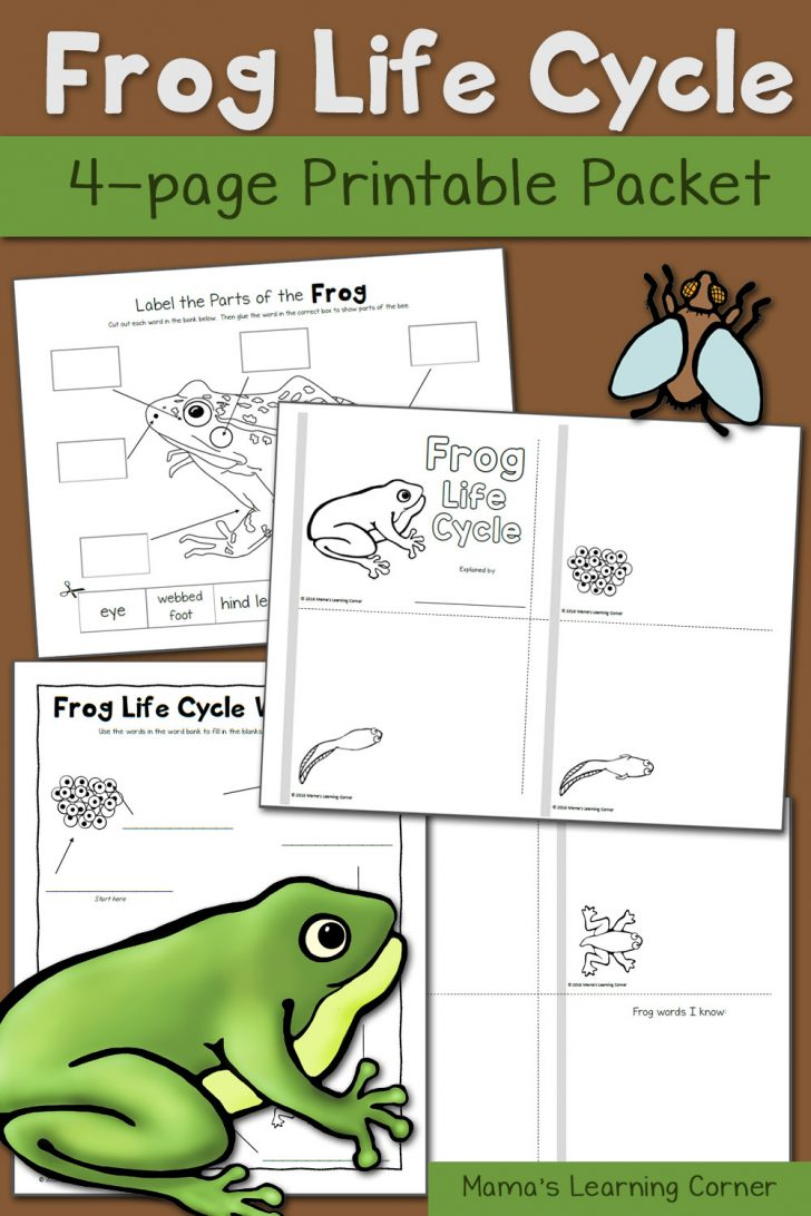 Life Cycle Of A Frog Free Printable Worksheets