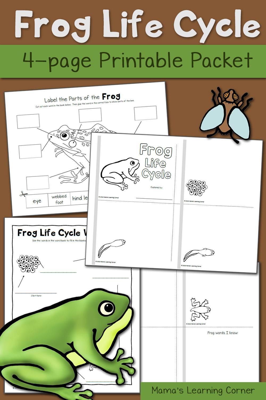 Frog Life Cycle Worksheets - Mamas Learning Corner | Life Cycle Of A Frog Free Printable Worksheets