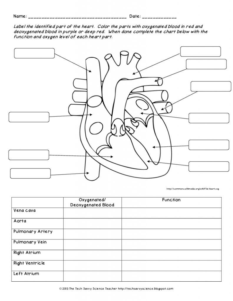 Human Anatomy Labeling Worksheets Human Body System Labeling - Free | Free Printable Human Anatomy Worksheets