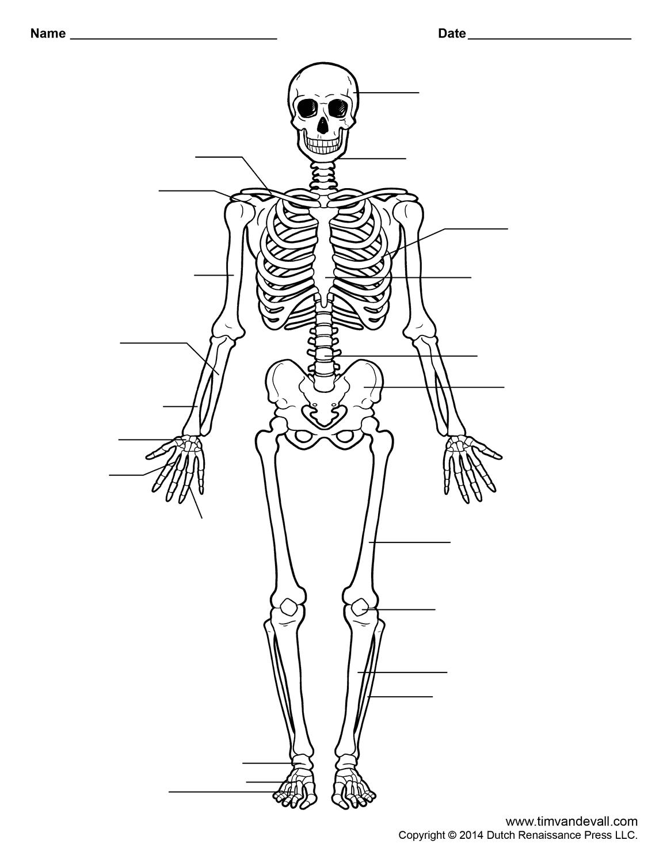 Human Skeleton Worksheet | Homeschool-Science | Human Skeleton | Human Skeleton Printable Worksheet