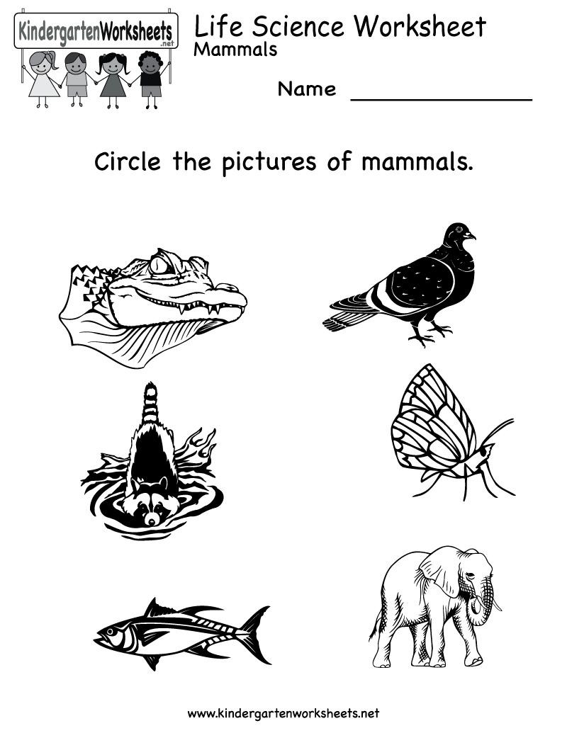 Kindergarten Life Science Worksheet Printable | Worksheets (Legacy | Kindergarten Science Worksheets Printable