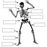 Label The Skeleton Worksheet   Free Esl Printable Worksheets Made | Human Skeleton Printable Worksheet