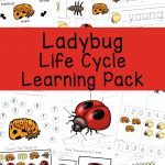 Ladybug Life Cycle   Fun With Mama | Free Printable Ladybug Life Cycle Worksheets