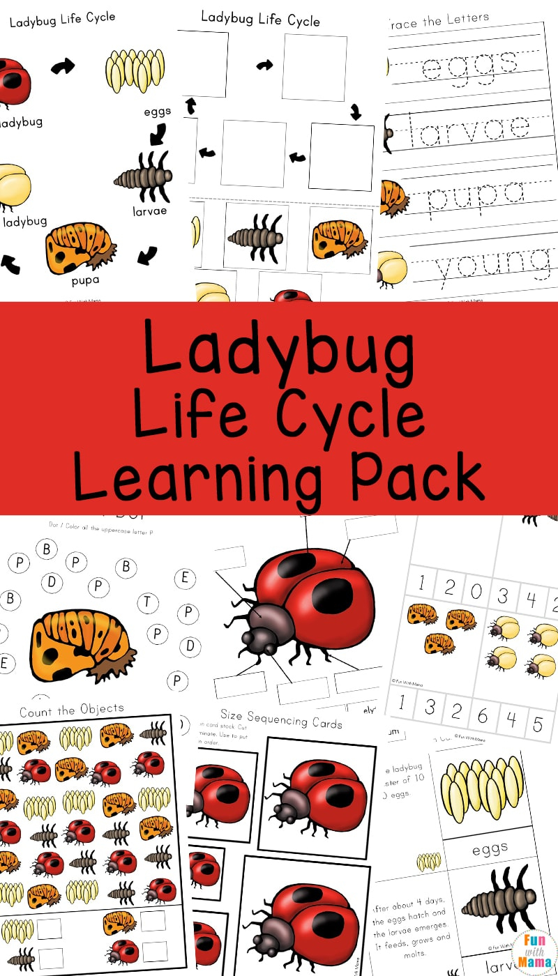 Ladybug Life Cycle - Fun With Mama | Free Printable Ladybug Life Cycle Worksheets