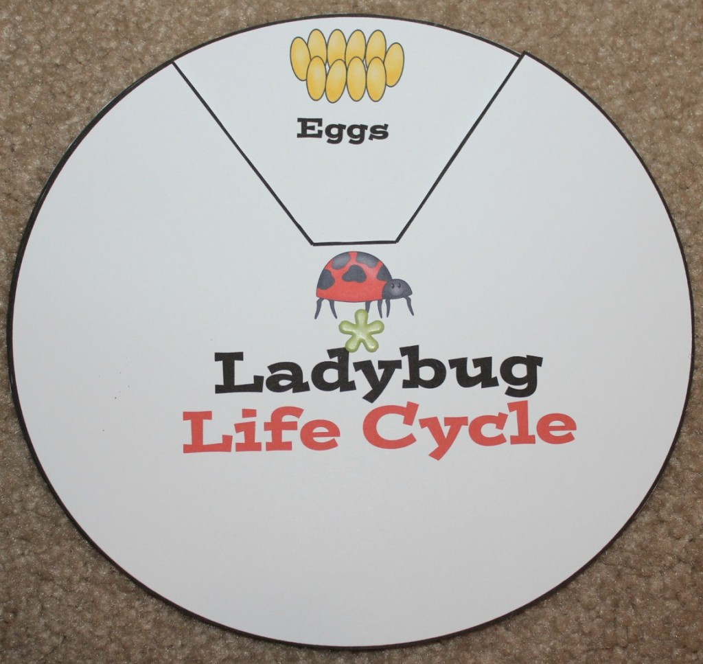 Ladybug Life Cycle Printables & Activities | Free Printable Ladybug Life Cycle Worksheets