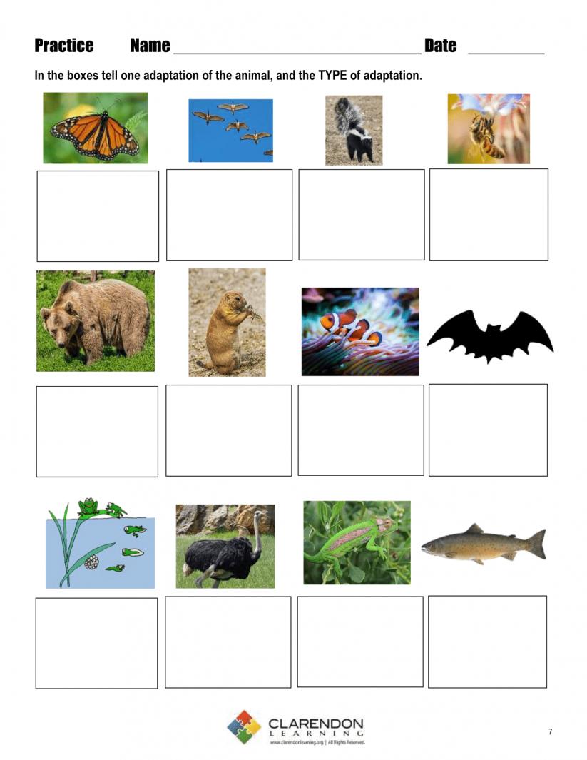 Math : Quotes Life Science Adaptations Quotesgram 1803909774 | Free Printable Worksheets Animal Adaptations