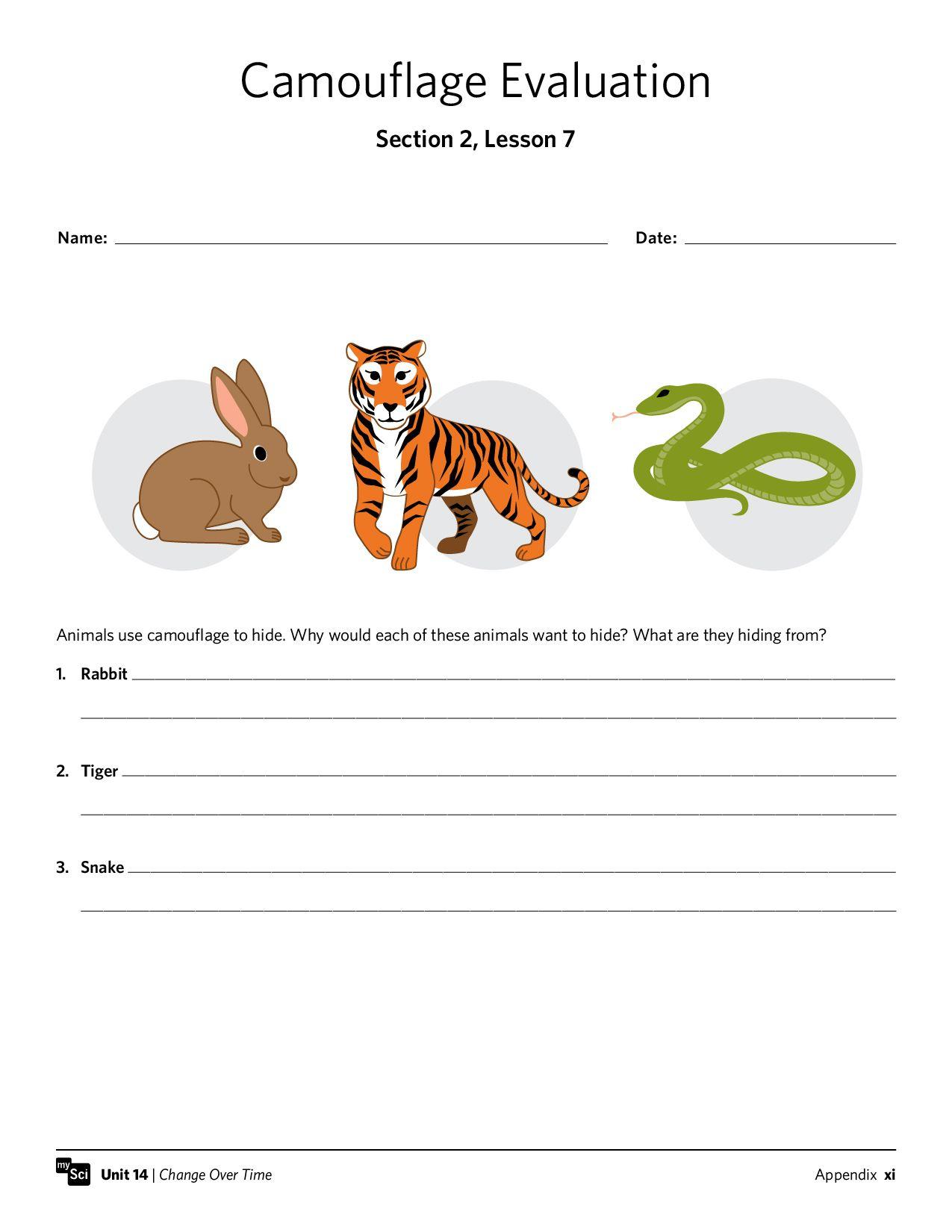 Mysci Unit 14 - Isp | Third Grade | Third Grade, Grade 1, Worksheets | Free Printable Worksheets Animal Adaptations