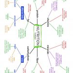 Nutrition (Nutrients) Mind Map And Exercises Worksheet   Free Esl | Free Printable Nutrition Worksheets