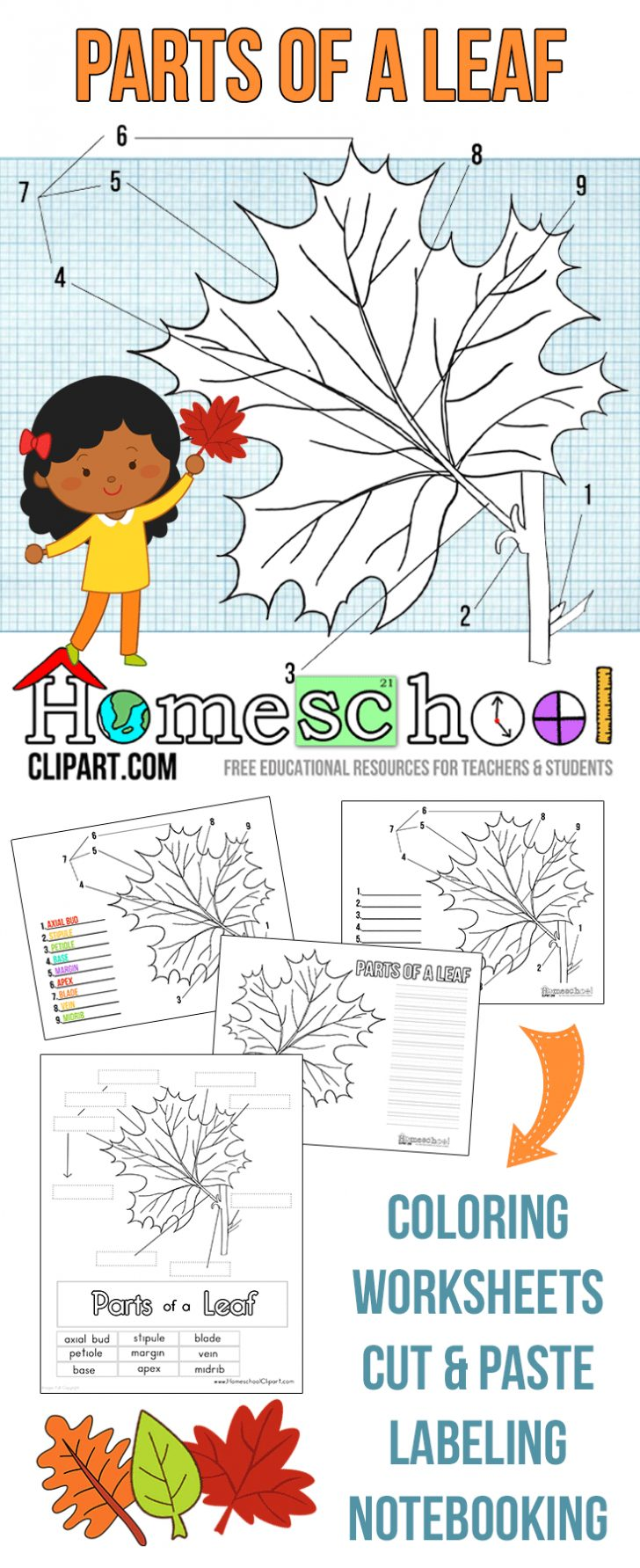Free Printable Leaf Worksheets