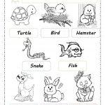 Pets Worksheet   Free Esl Printable Worksheets Madeteachers | Pets Worksheets Printables