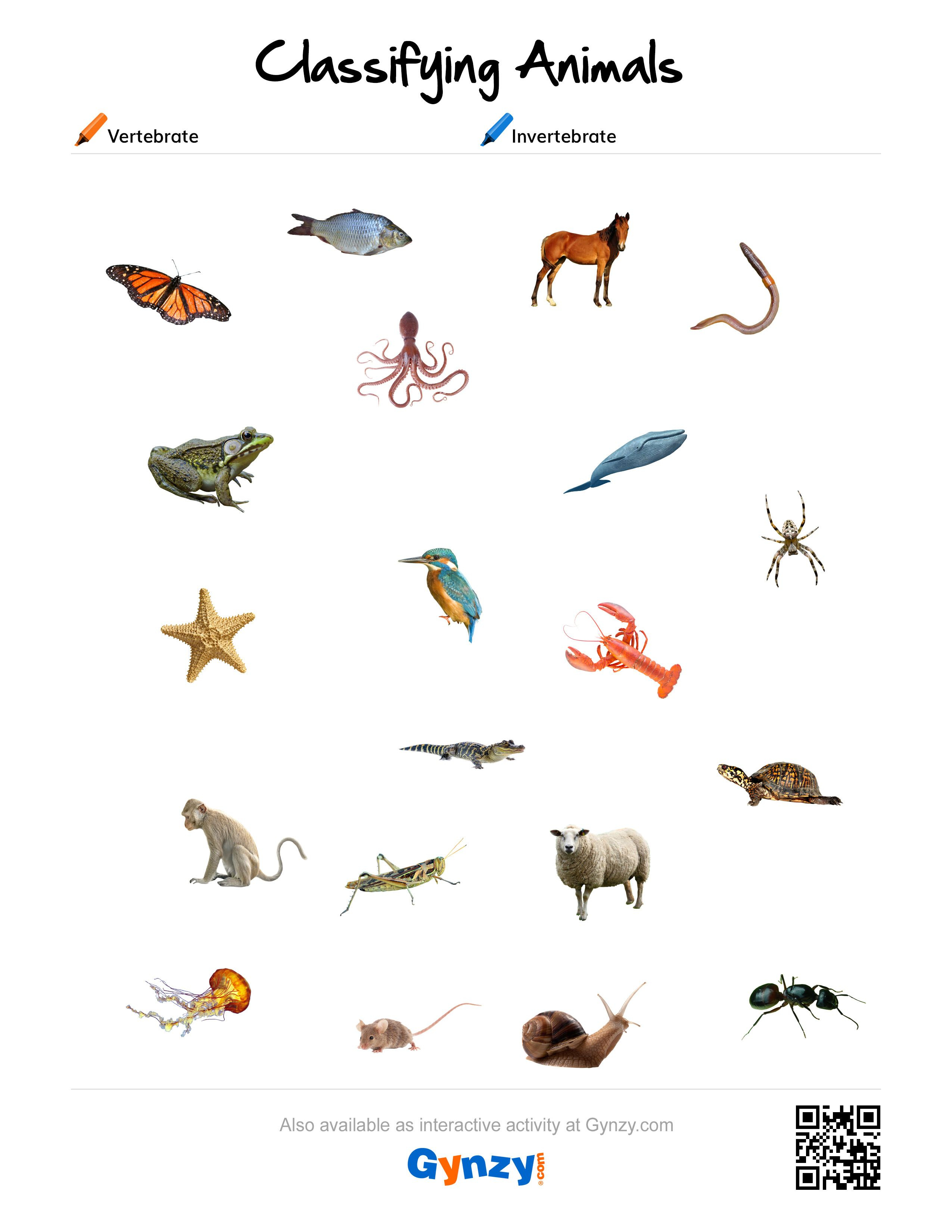 Pinteacher Timo On Classifying Animals | Classes Of Vertebrates | Free Printable Worksheets On Vertebrates And Invertebrates