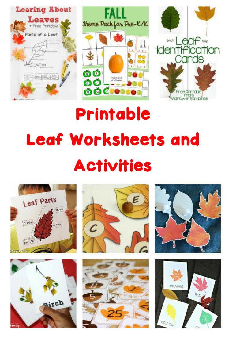 Printable Leaf Worksheets And Activities | Free Printable Leaf Worksheets