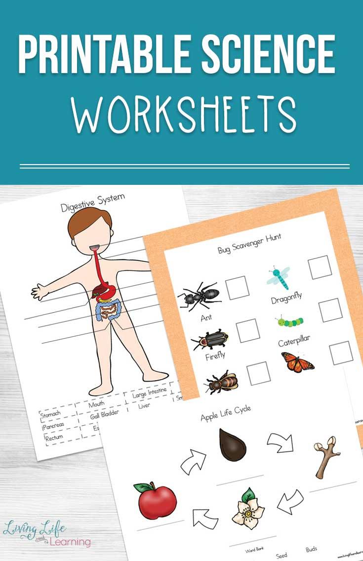 Printable Science Worksheets For Kids   Printable Science Worksheets