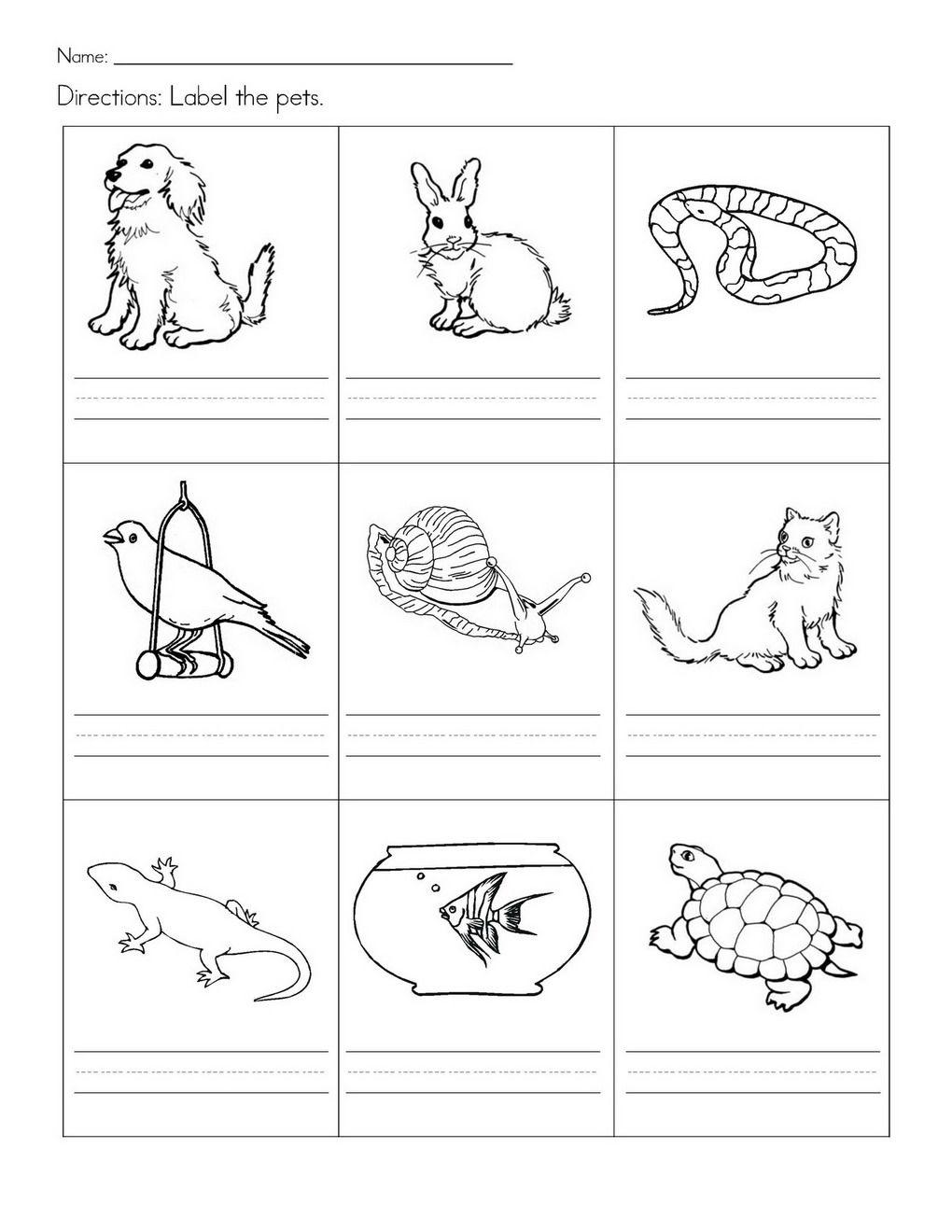 Stempelkaart | Pets Preschool Theme | Kindergarten Worksheets | Pets Worksheets Printables
