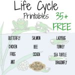 The Activity Mom   Life Cycles Printable   The Activity Mom | Free Printable Ladybug Life Cycle Worksheets
