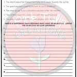 Understanding Adjectives Worksheets   No Prep Printables | Softball Worksheets Printable