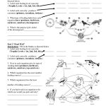 Worksheets On Food Chains And Food Webs | Science | Food Web | Food Chain Printable Worksheets